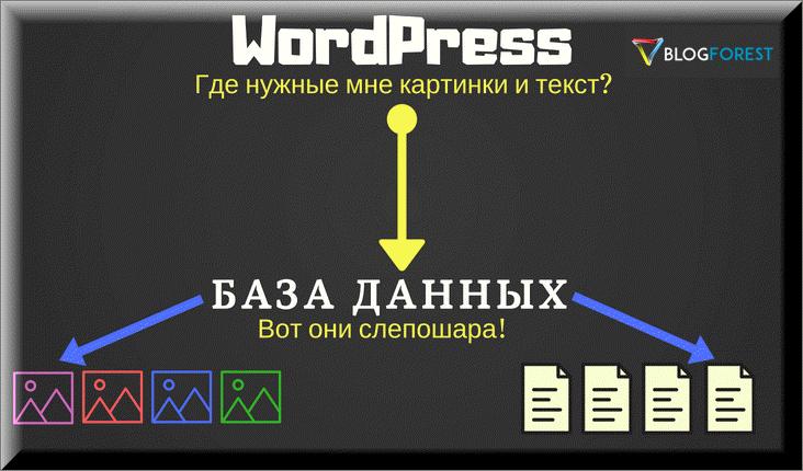 Wordpress посылает запросы в базу данных